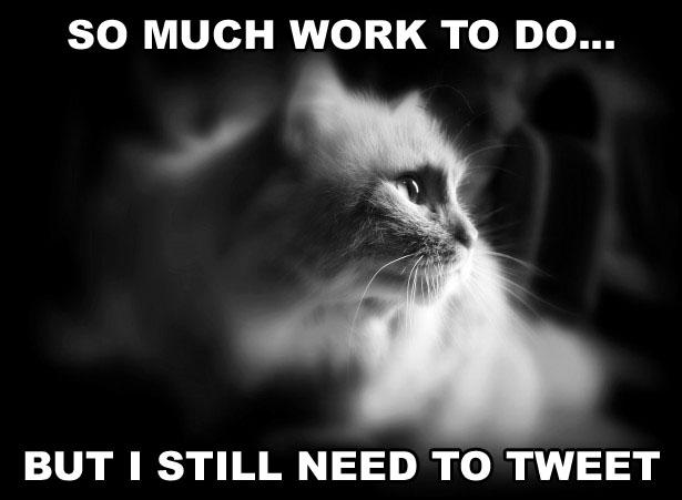 SOCIAL-MEDIA-CAT